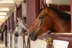 Hästar i stall