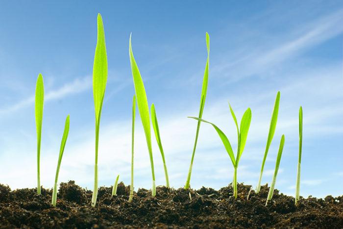 Växtlighet