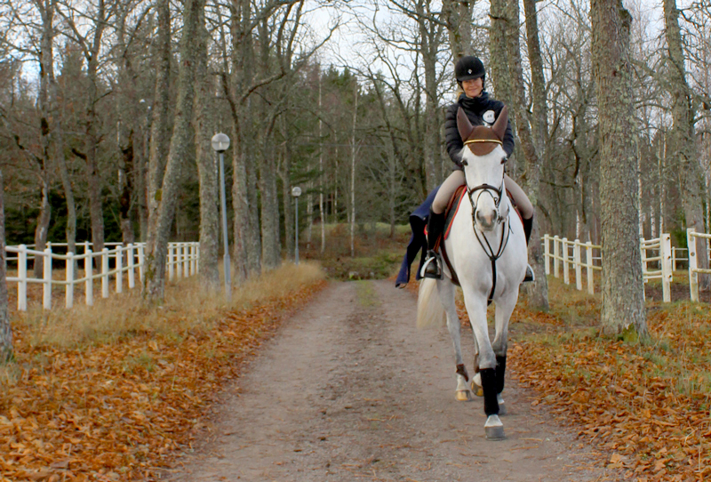 Ryttare till häst Malin Baryard Johansson