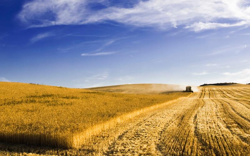 Bild på en skördetröska ute på ett fält