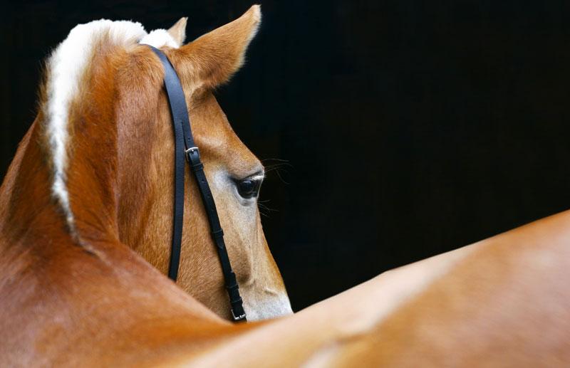hästar på foder
