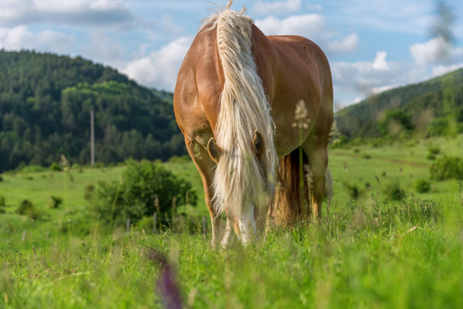 Bbetande häst