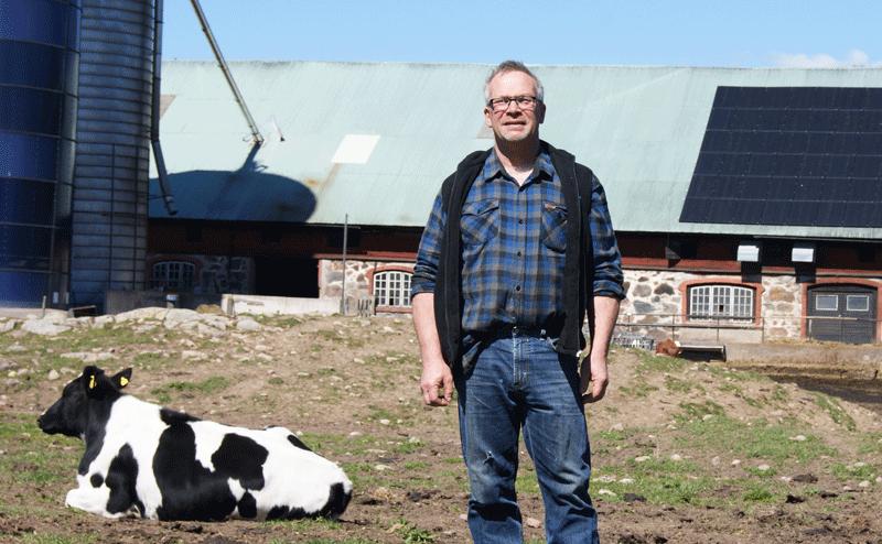 Per Segersson med svartvit ko