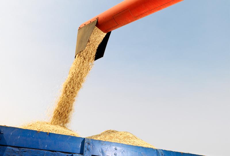 Tröska tömmer säd i traktorvagn