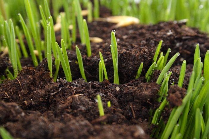 Fröer som spirar ur marken