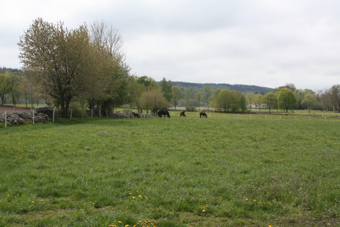 Betande hästar långt bort på ett fält