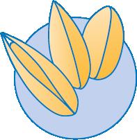 Bild på Scandinavia Seed logo