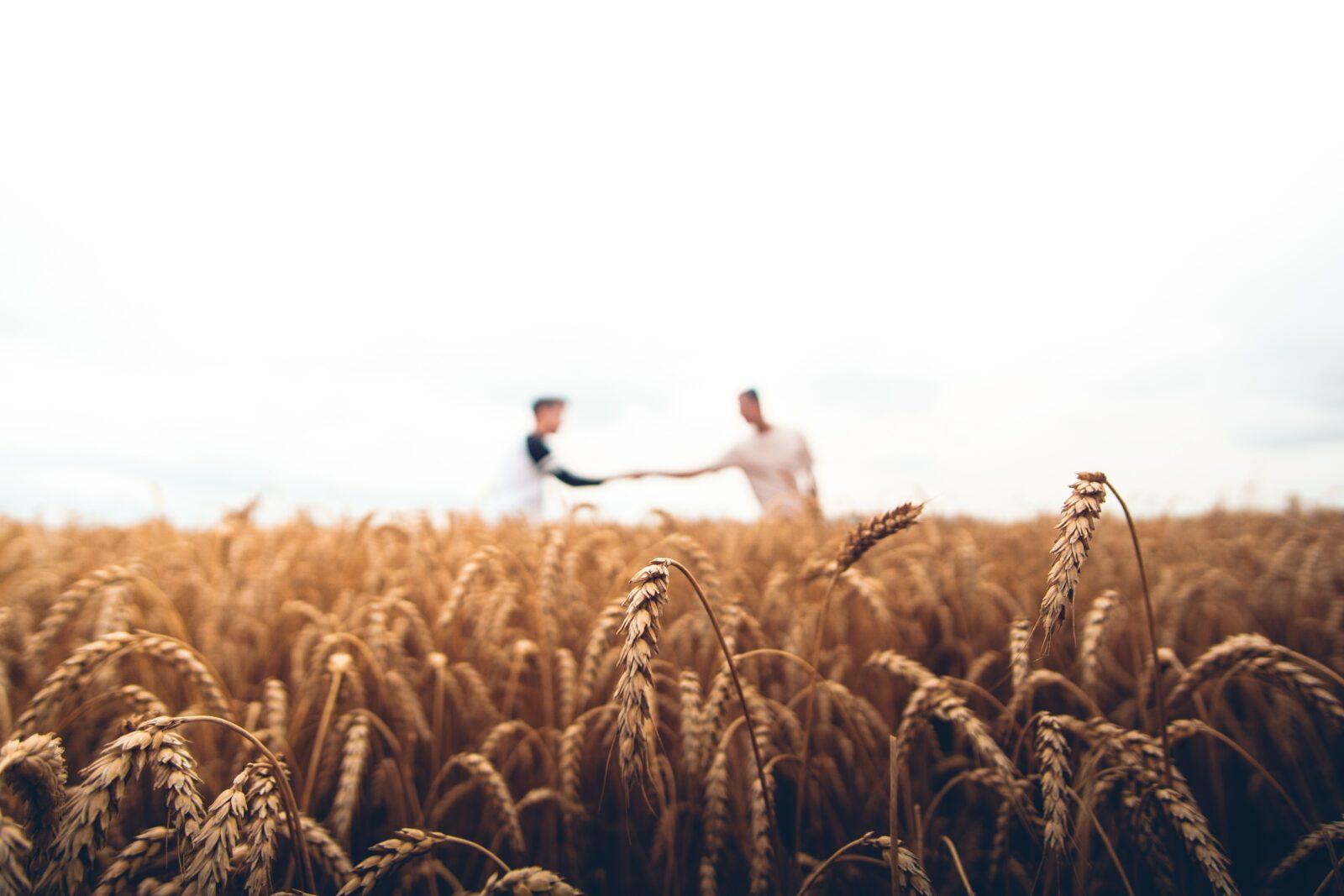 Två män skakar hand på ett fält