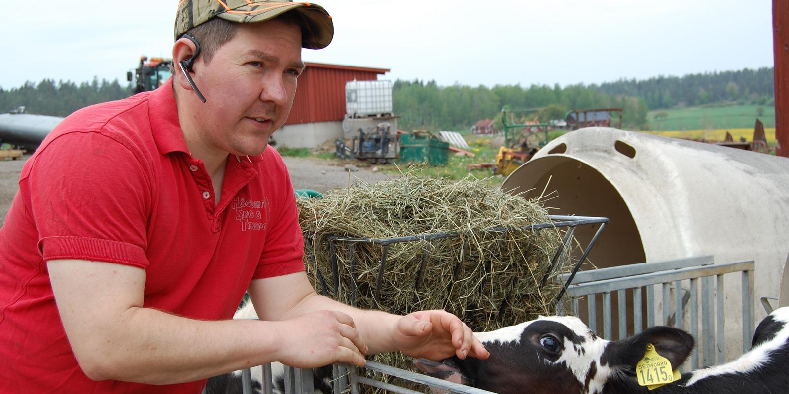 Mjölkbonden Erik Jonsson med en kalv