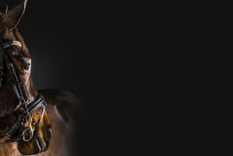 Brun häst med svart bakgrund