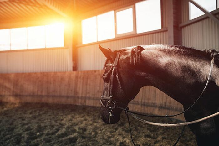 Häst-i-solljus-i-ridhus