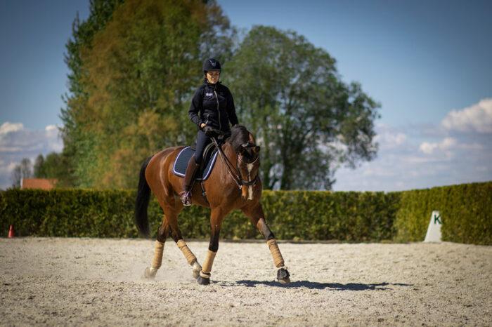 Häst_ryttare_paddock_soligt