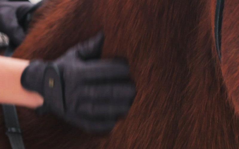 Pälsbyte häst