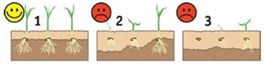 Växtsätt för plantan