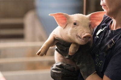 Kvinna med en gris i famnen